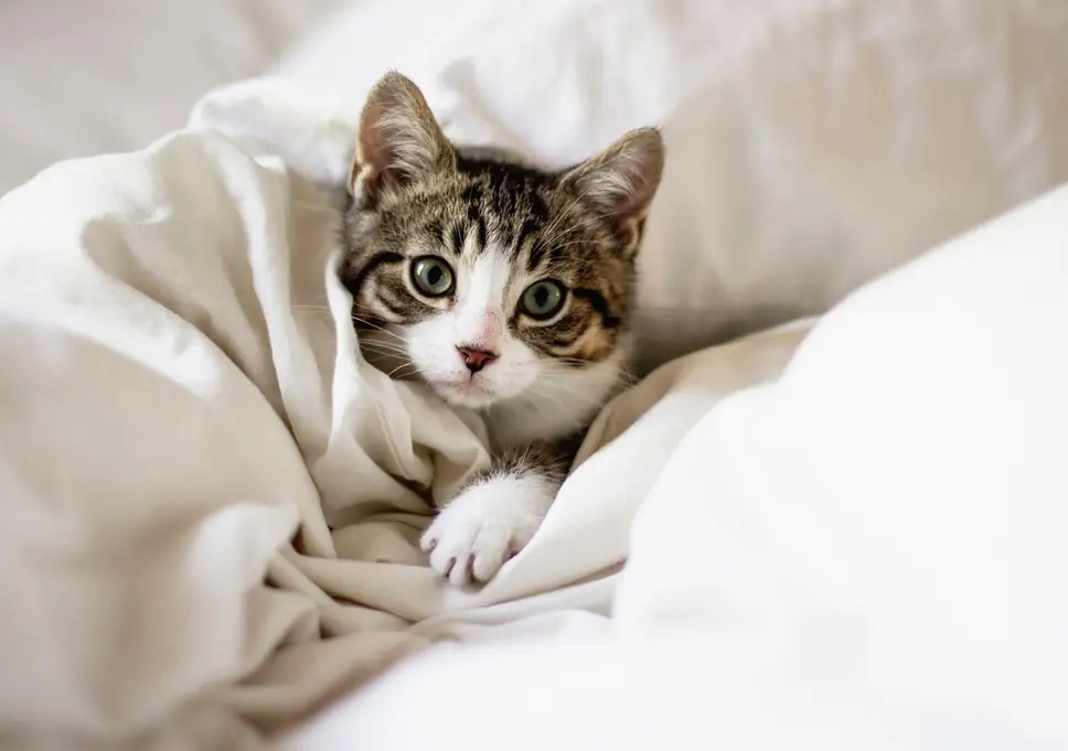 Why Cats Are Extremely Simple to Adore
