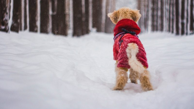 Dog Cloth Patterns that would make your Dog Look Stylish