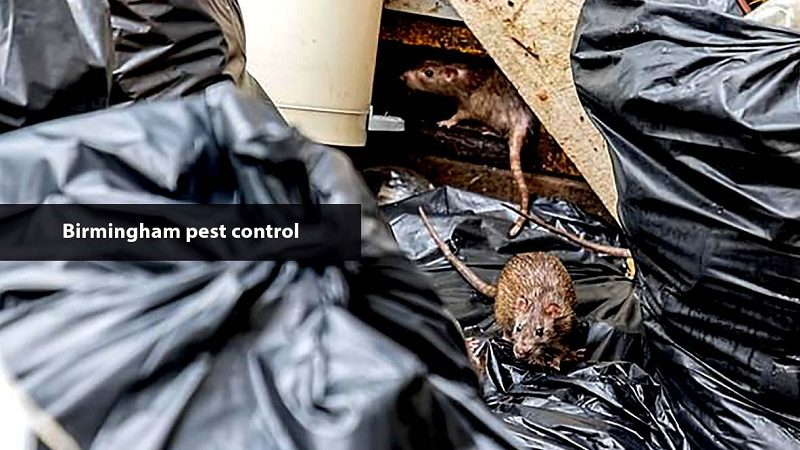 A Price Guide for pest control near me
