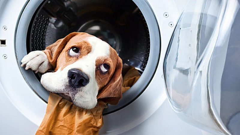 9 Hacks From Experts To Help You Remove Pet Odor At Home