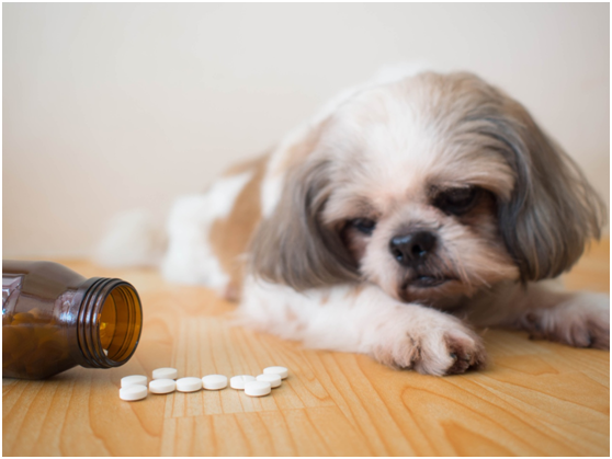 The most important dietary supplements for your pet dog