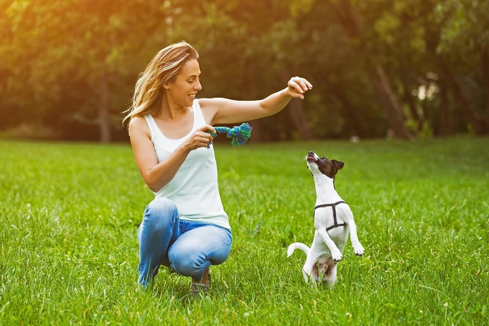 When to Start Training for Your Puppy?
