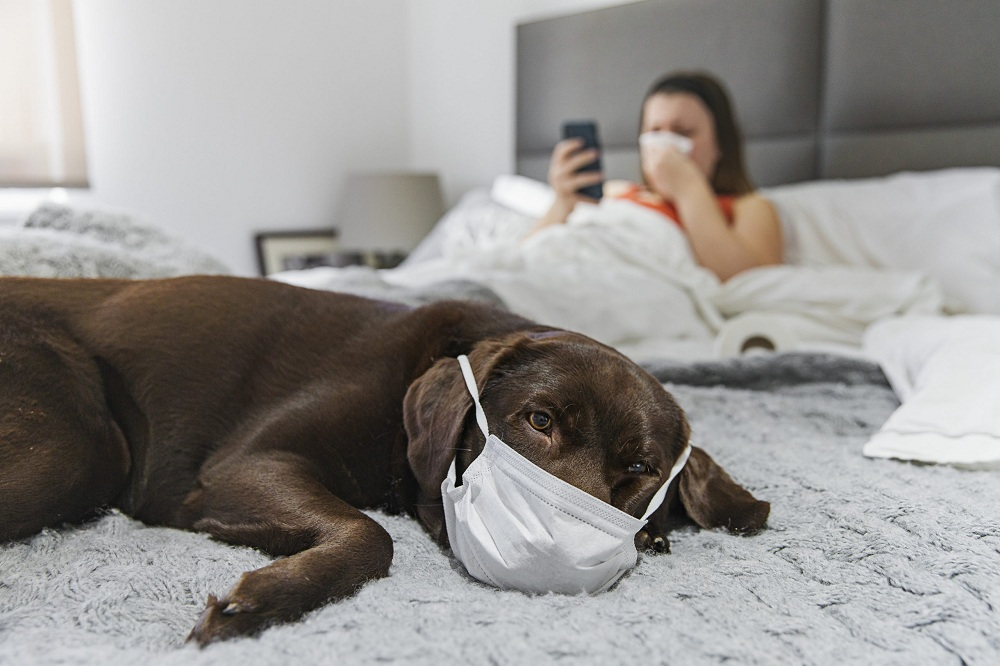 Pet Care during COVID-19 Pandemic
