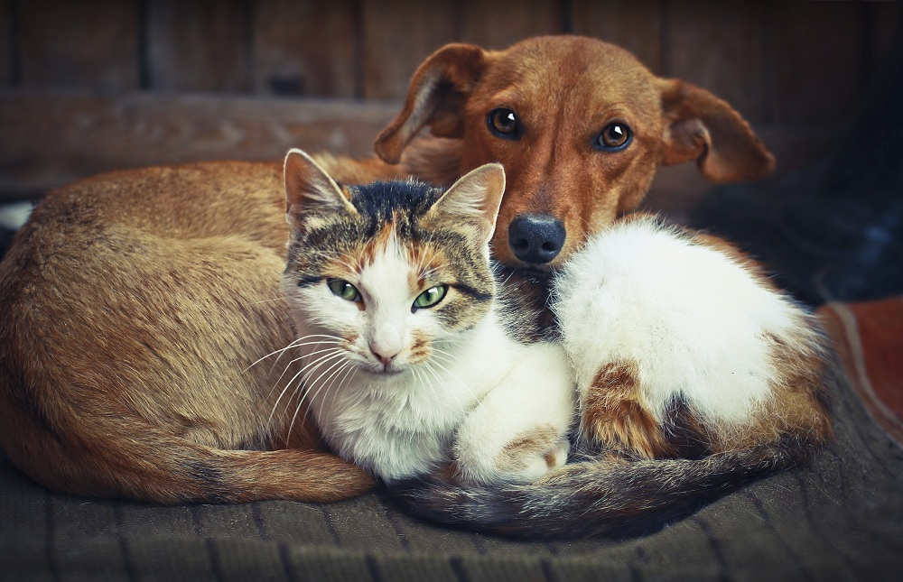 Some Important Facts about Cats and Other Farm Animals