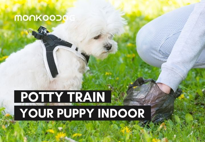How to Potty Train a Dog Indoors