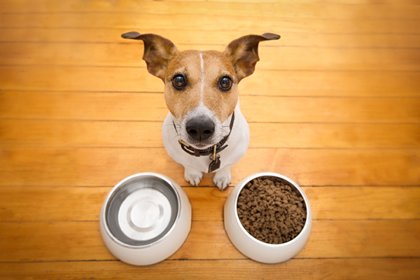 Tips Of Buying Pet Food Online
