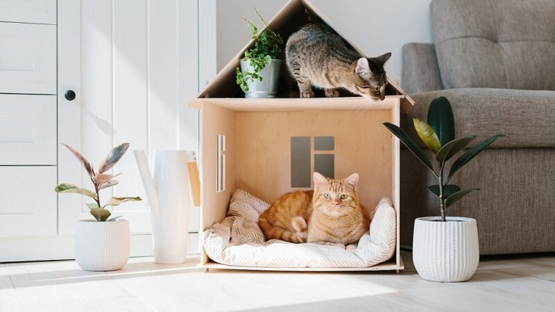 Cat Furniture: Wonders that Keep your Cat AND Furniture Happy