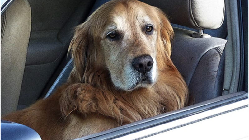 3 Essential Things to do When You Spot a Dog in a Hot Car