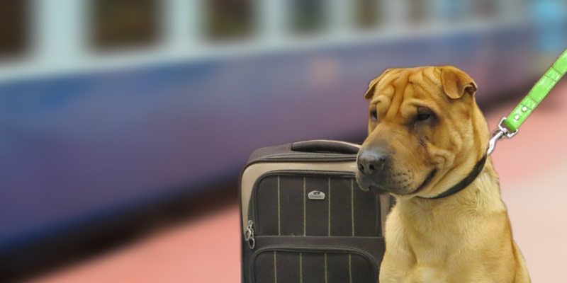 How do you transport a dog over a long distance ?