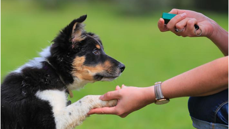 Guide To Find A Friendly Dog Trainer For Your Dog