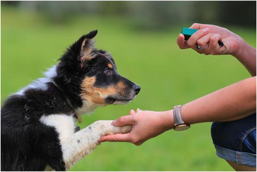 Understanding Gingival Hyperplasia in Dogs