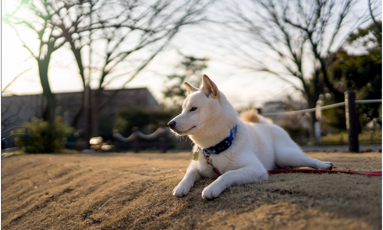 Petplay's Website Can Help You To Understand Your Pet