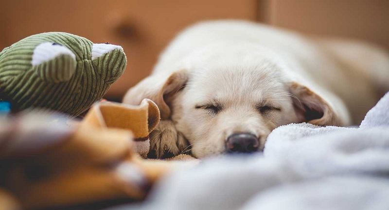 Caring for a dog in 5 steps!