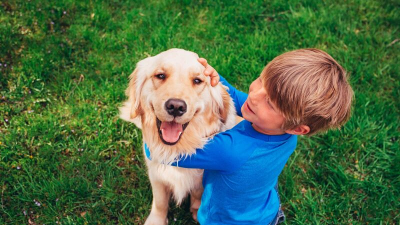 What is the Best Dog Breed for your Family?