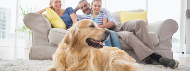 Consider These Things for Your Pets at Home