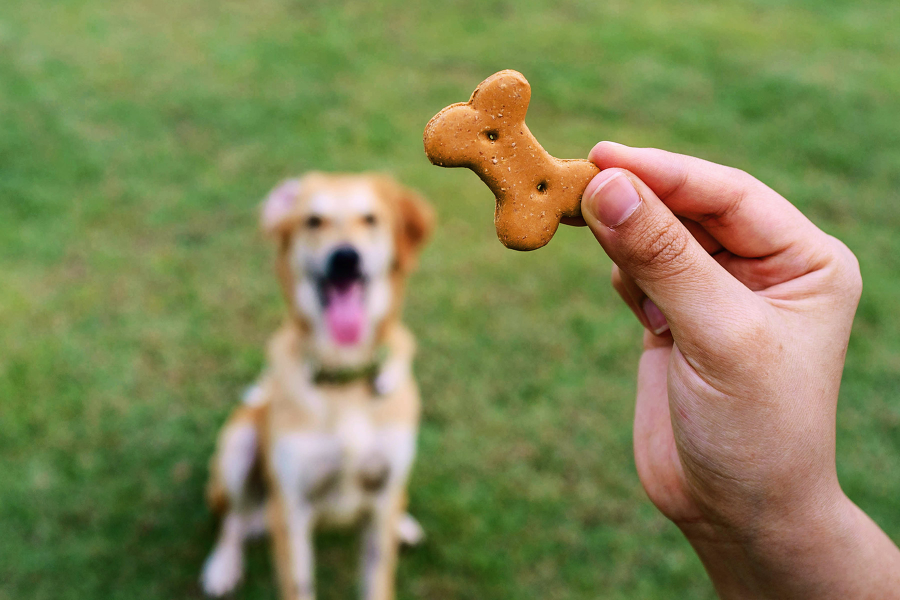 Outdoor Risks for Curious Dogs