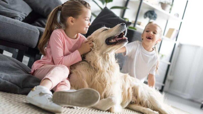 Let's explore a happy place for your pets!