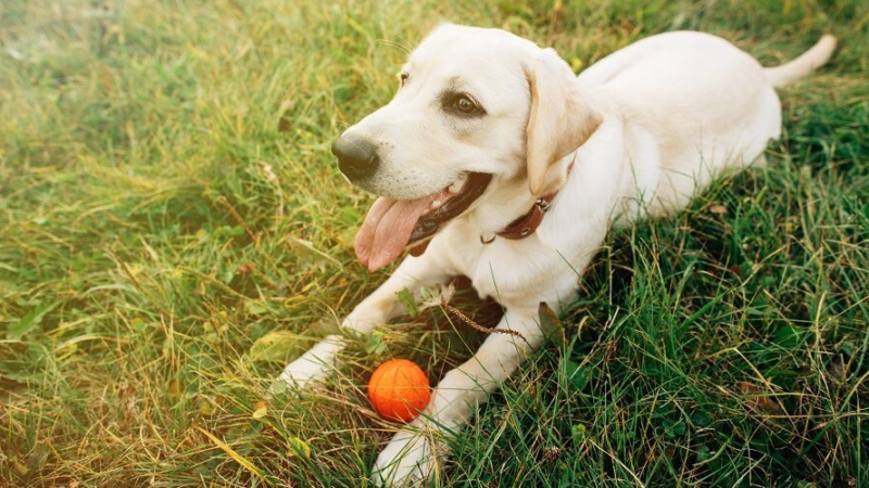 Things to Keep in Mind for Picking the Best and Safe Dog Toy