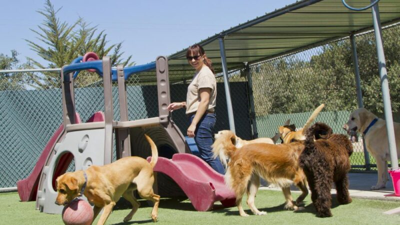 What is dog boarding?