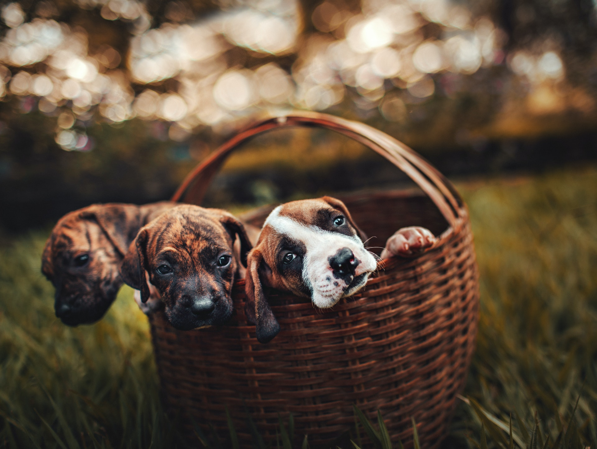 Finding Puppies for Sale: Tips to Help Reduce Stress for Your New Puppy