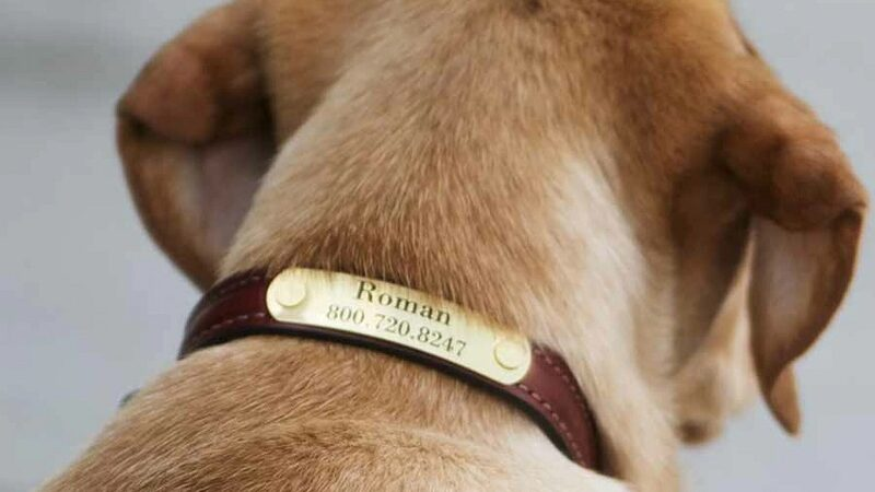 Explore Your Chances with the Dog Collars: The Best Ones for Your Dog