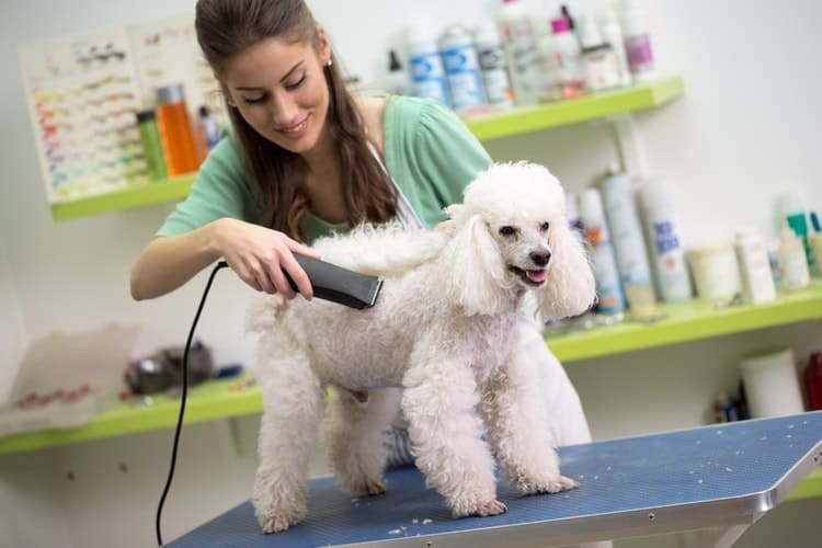 How to Find the Best Dog Grooming Products