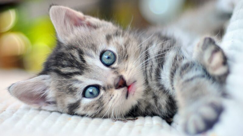 Kitten Care – Getting Started