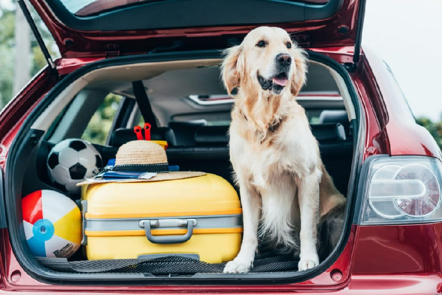 Awesome Car Accessories For the Dog Lover