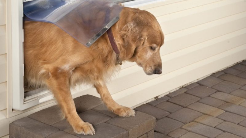Pet Doors Best Suited For Large Dogs