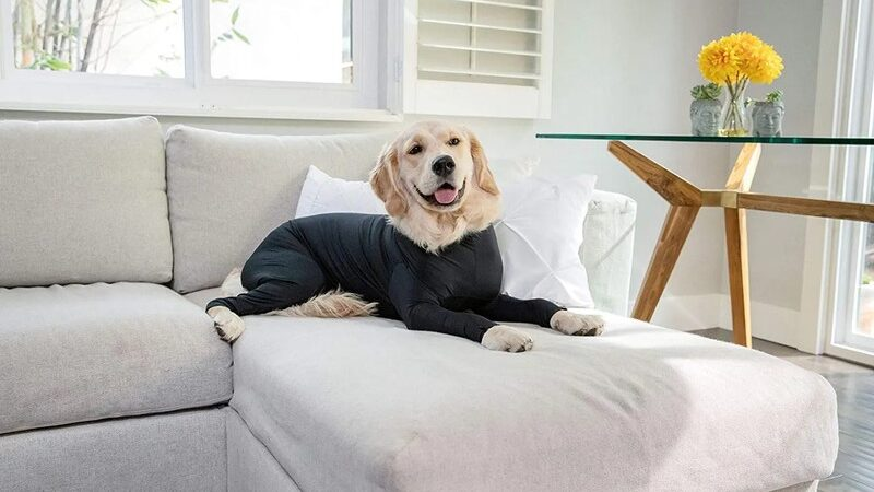 Why The Surgical Onsie for Your Dog Is An Absolute Necessity