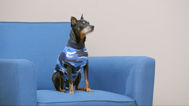Say no to Cone of Shame. Put your pets in surgical suits instead