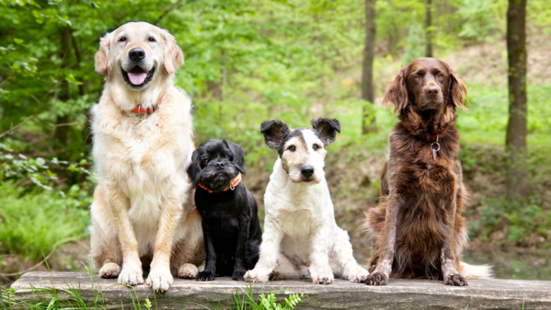 How to choose the right pet for yourself?