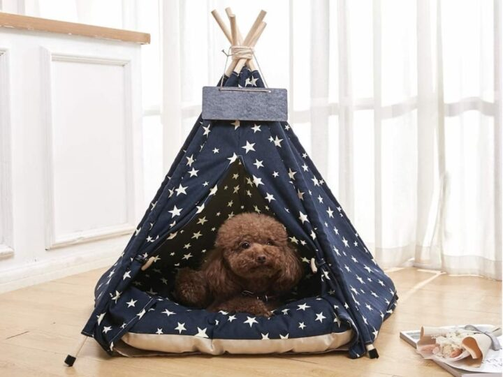 Looking for Australia's Most Luxurious Dog Teepee Information Online